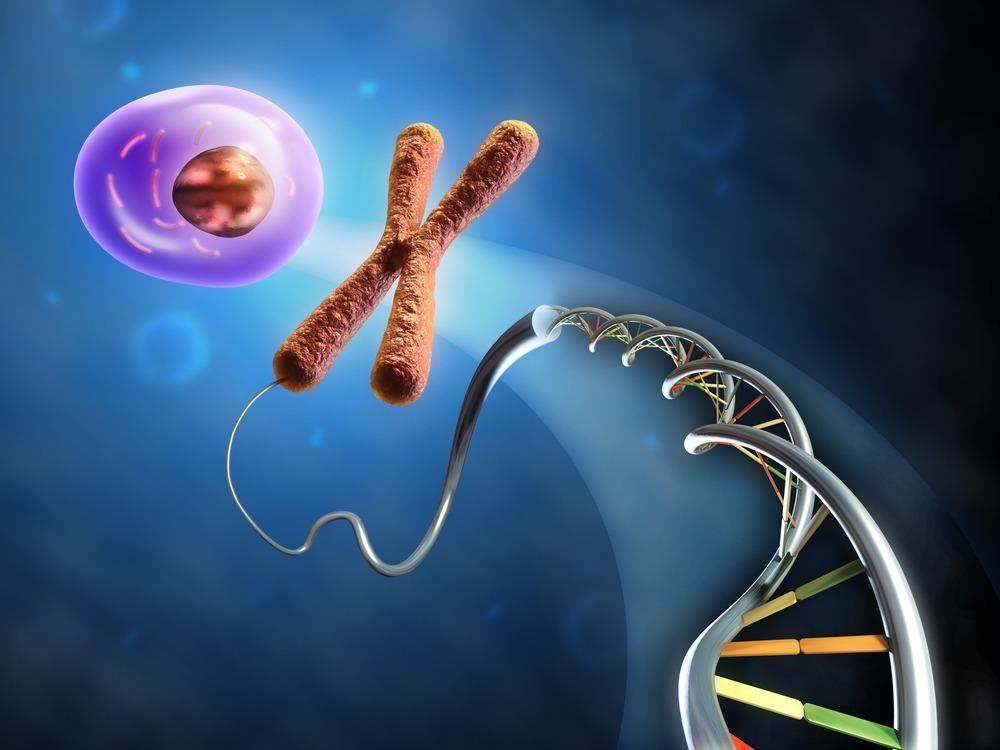 cos e la genetica cromosoma